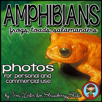 Photos Photographs AMPHIBIANS! Science and Nature Personal