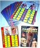 ANATOMY: Foldables and Assessment Book Bundle