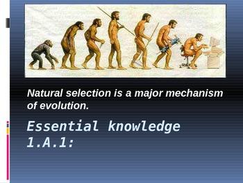 AP Biology Big Ideas Natural Selection