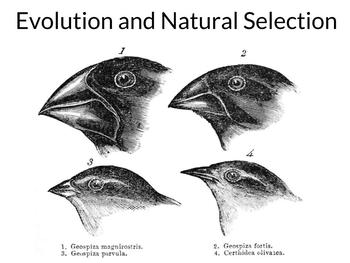 AP Biology: Evolution and Natural Selection - Updated and