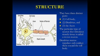 AP Biology Review - Nerves and the action potential -ppts,
