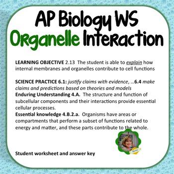 AP Biology Worksheet:  Learning Objective 2.13, Organelle