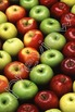 Photos Photographs APPLES and Clip Art Personal and Commer