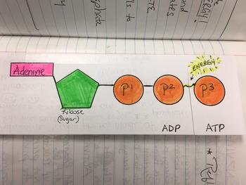 ATP Foldable