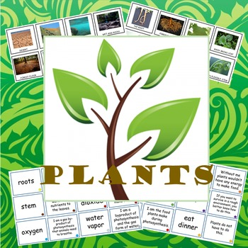 Activities for studying plants