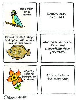 Adaptations Matching Game by Science Doodles