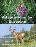 Adaptations for Survival: How Animals Protect Themselves