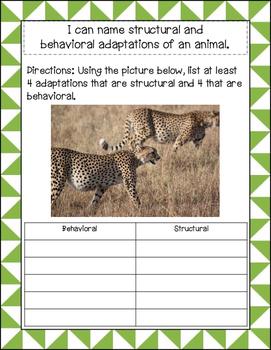 Adaptations of a Cheetah
