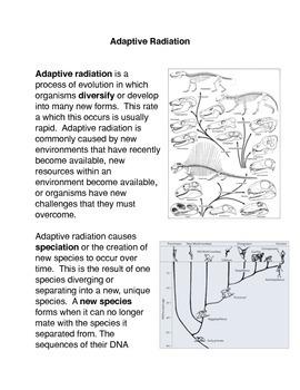 Adaptive Radiation Common Core Activity