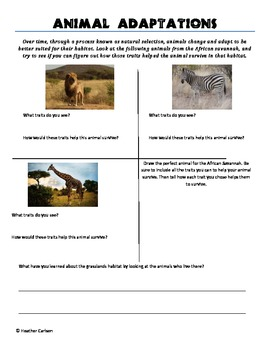African Animal Adaptations