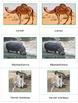 Animals of Africa : Three Part Cards