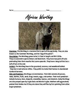 African Warthog Review Article Lesson Facts Information Qu