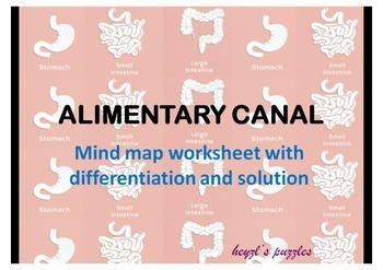 Alimentary canal mind map with differentiated tasks and an