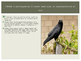 Birds- All About Birds!
