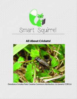 All About Crickets!