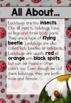 Ladybugs Life Cycle