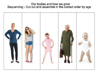 All About Our Bodies Sequencing Worksheet