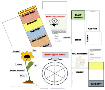 All About Plants Lapbook