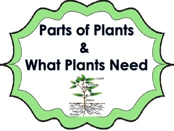 All About Plants Science Activity for Whole Group or Scien