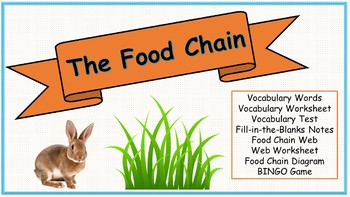 All About the Food Chain