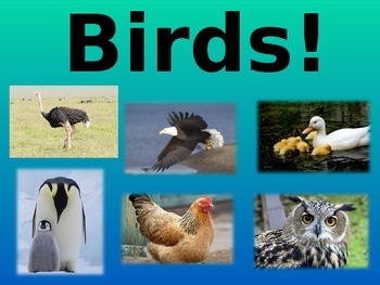 All about Birds!