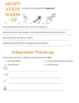 All about adaptations warm-ups