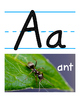 Alphabet Posters: Real-Life Animals