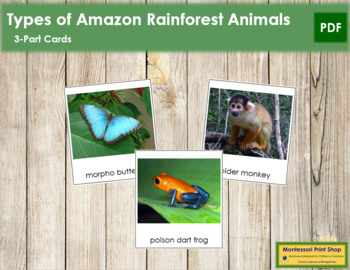 Amazon Rainforest Animals: 3-Part Cards
