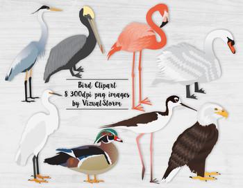 Bird Clip Art, 8 Hand Drawn Birds, Detailed Wildlife Clipa
