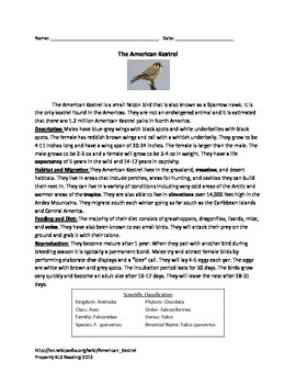 American Kestral - bird - information article questions vo