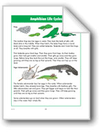 Amphibian Life Cycles