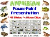 Amphibian PowerPoint Presentation (Biology / Zoology)