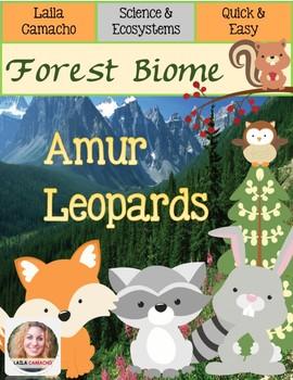 Forest Animals Amur Leopards