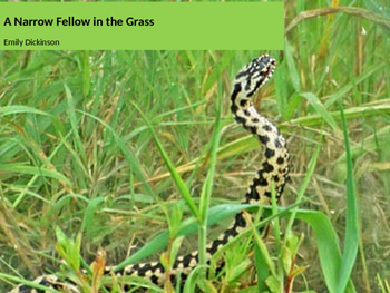 Analysis of the poem 'A Narrow Fellow in the Grass' by Emi