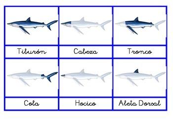 Anatomía del tiburón