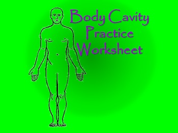 Anatomy: Body Cavity Practice Worksheet