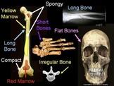 Anatomy, Human Body and Health Unit