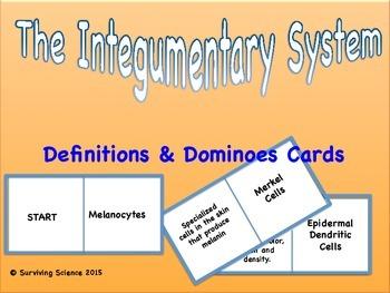Anatomy: Integumentary System Vocabulary Domino Card Game