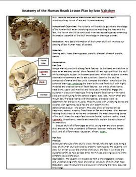 Anatomy of Human Head for Artists