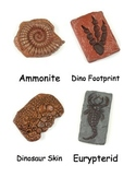Ancient Fossils Nomenclature
