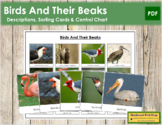 Animal Adaptation: Birds and Beaks