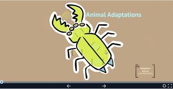 Animal Adaptation Prezi