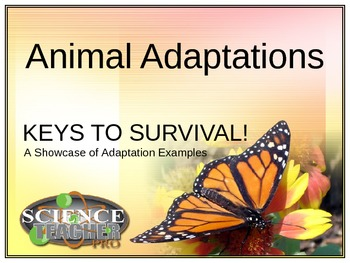 Animal Adaptation Showcase - Complete