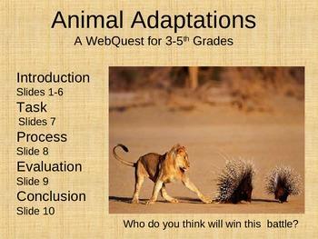 Animal Adaptation Webquest