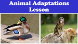 Animal Adaptations Lesson