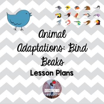 Animal Adaptations - Bird Beaks - Lesson Plan