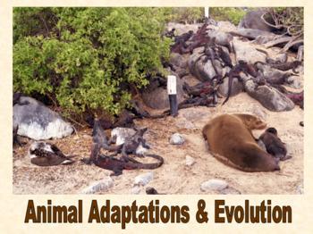 Animal Adaptations & Evolution presentation and student no