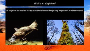 Animal Adaptations - Surving the Australian Desert Powerpo