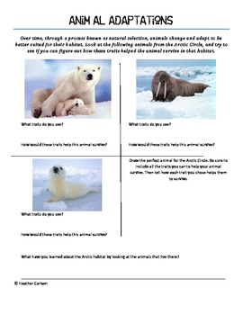 Animal Adaptations in the Arctic
