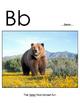 Animal Alphabet Cards--Full Size